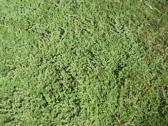 Get Rid of Bermuda Grass